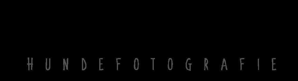 Hundefotografie in Frankfurt Hessen – Katharina Thielmann
