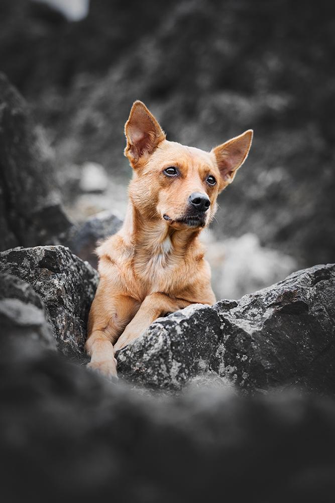 Hunde Foto liegend in Klippen