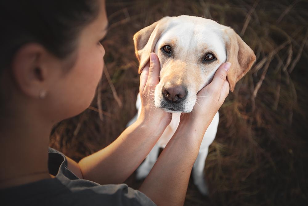 Besitzerin hält Kopf vom Hund
