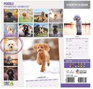 B2B kommerzielle Hundefotografie