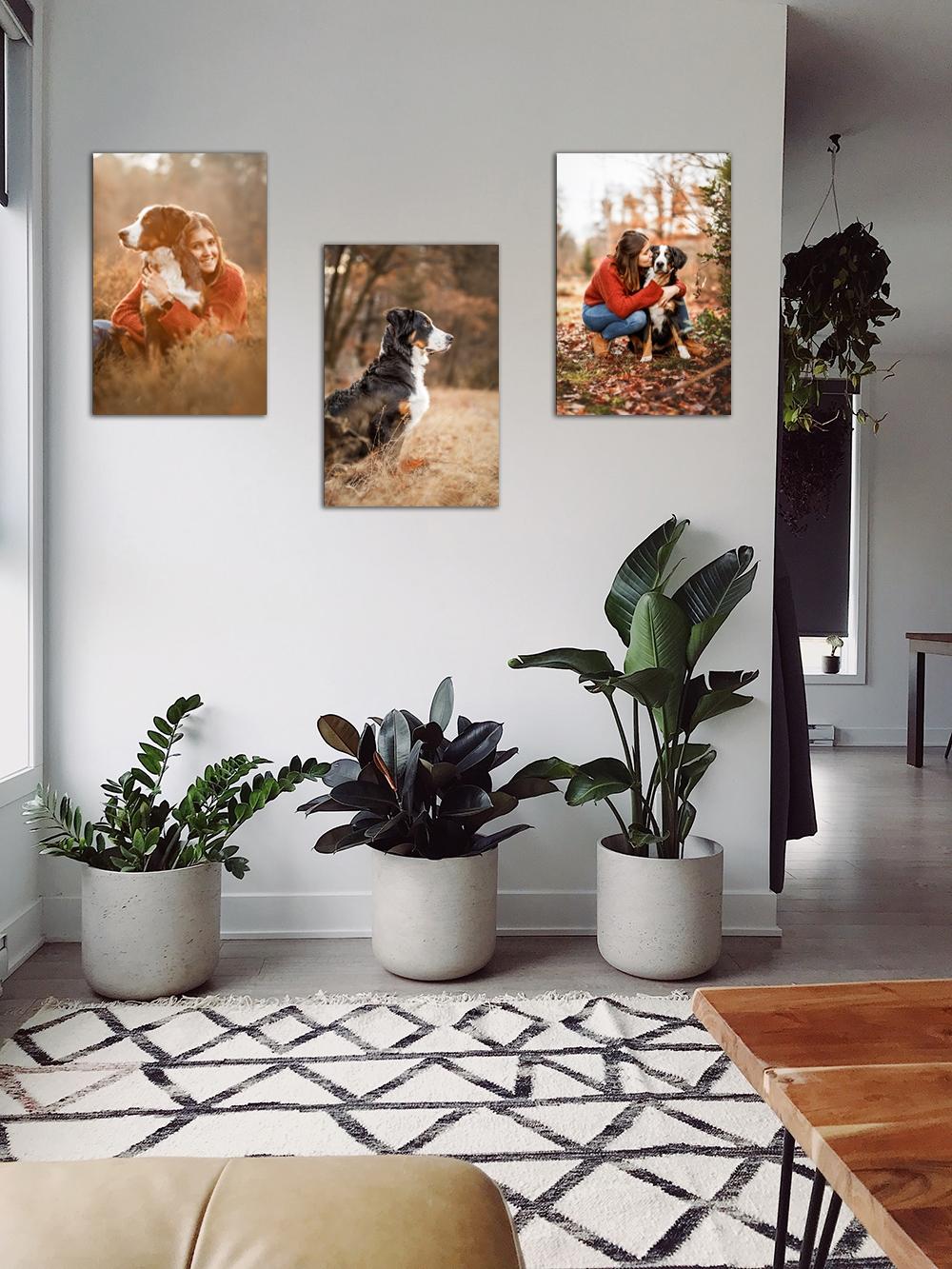 Wandbilder Hund Flur