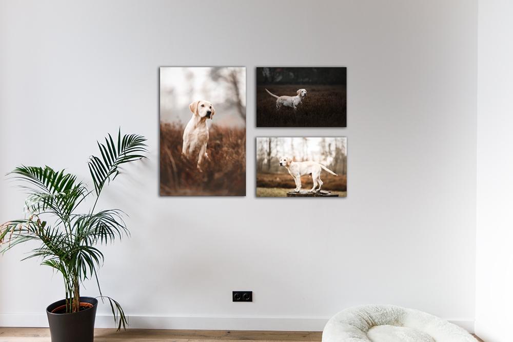 Wandbilder Hund Wohnzimmer